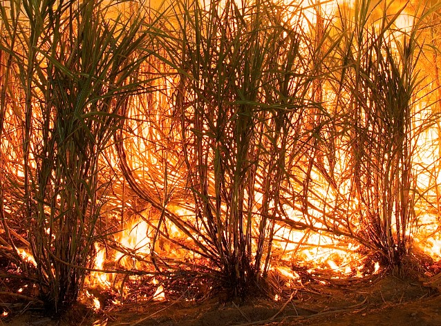 Improved safety in focus as cane harvesting gets into swing